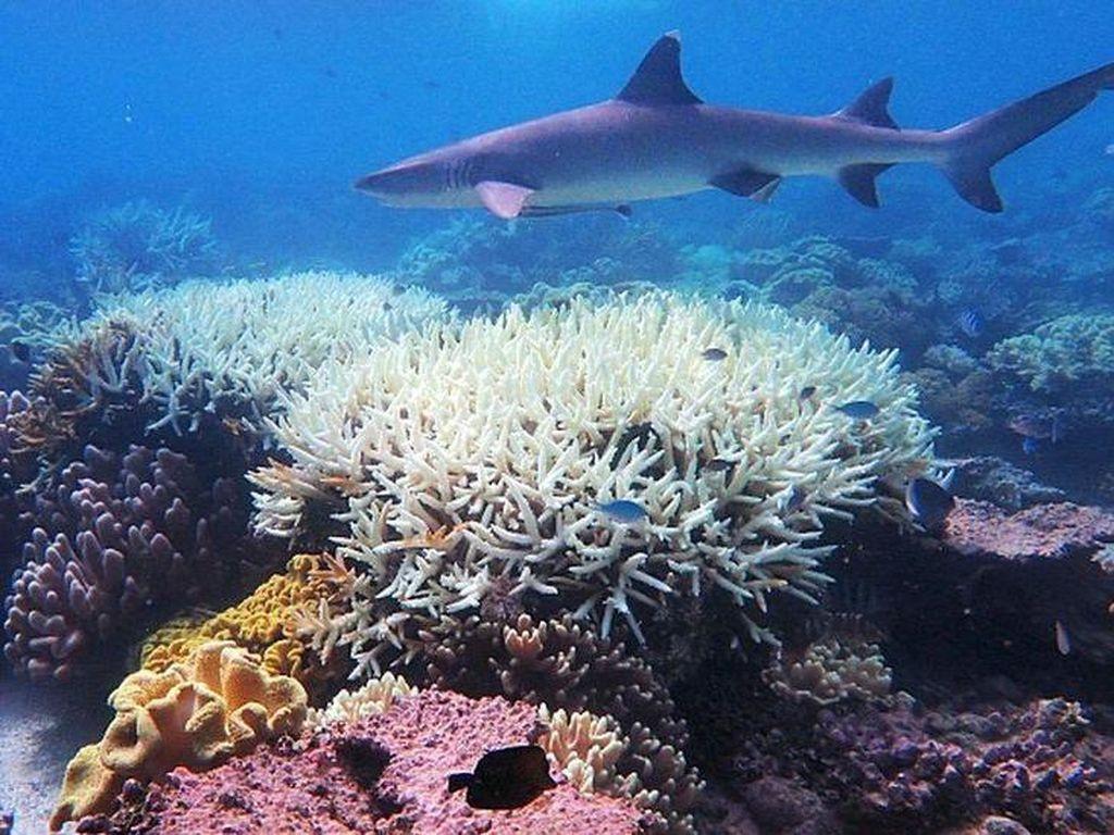Ekosistem Laut: Pembagian dan Jenis-Jenis Makhluk Hidup di Dalamnya