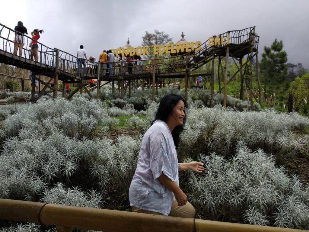 Taman Edelweis yang Tidak Biasa di Bali