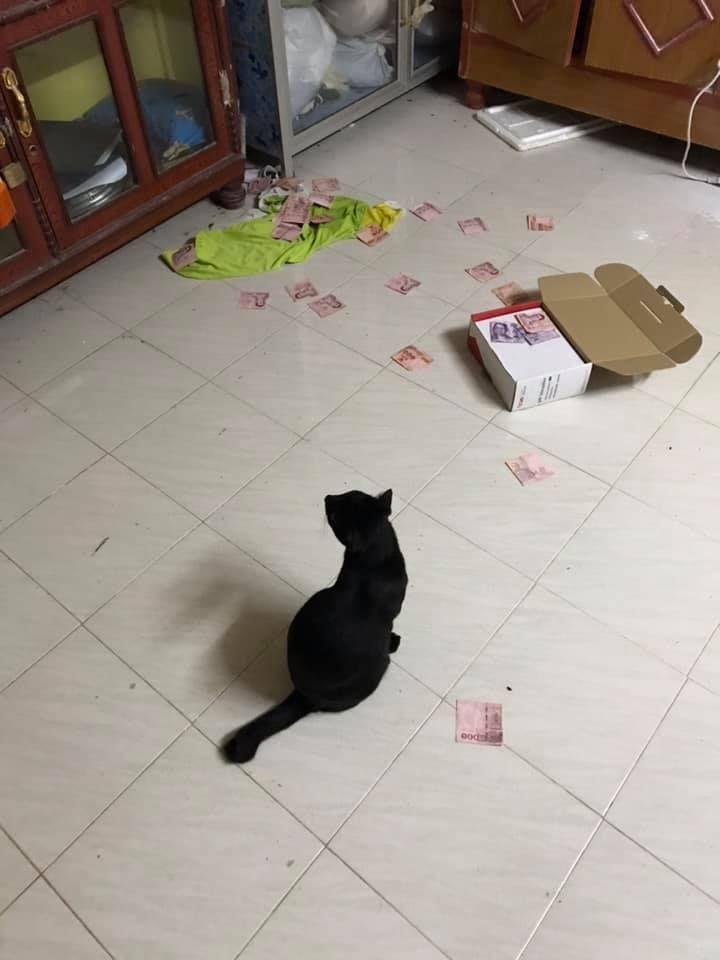 Kucing temukan uang yang disembunyikan suami