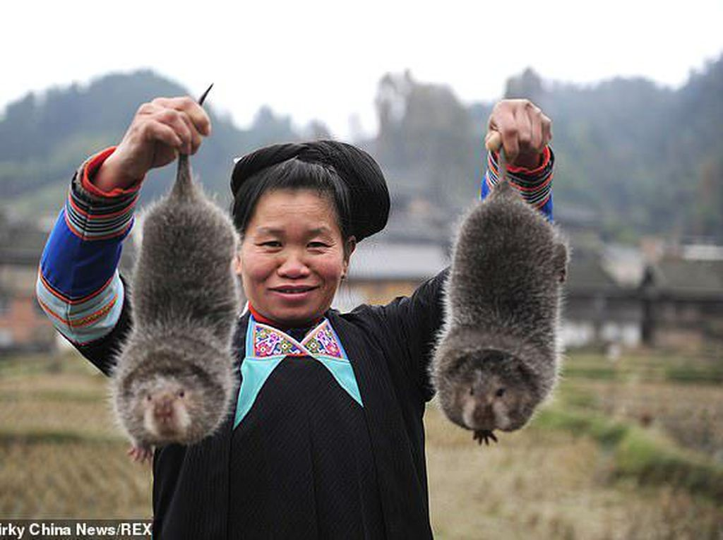 Pemerintah China Beli Semua Daging Hewan Liar Untuk Bantu Peternak