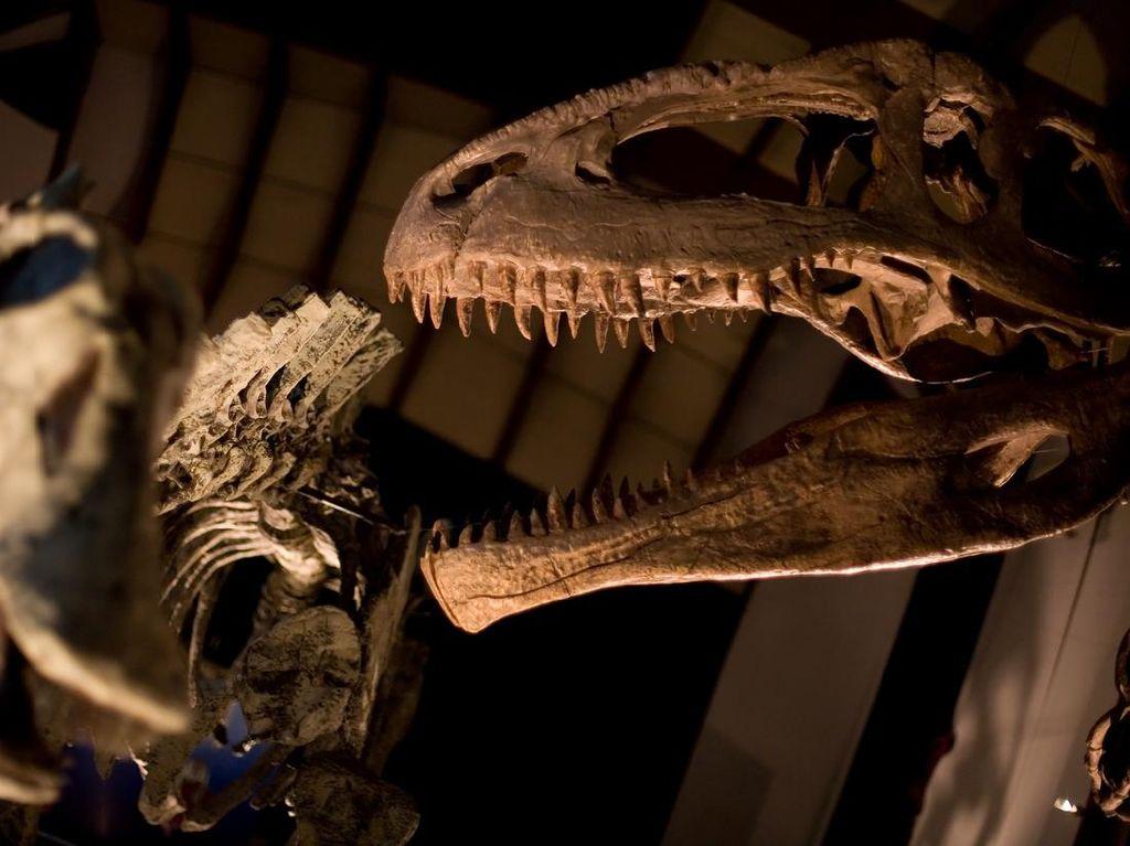 Nekat Bobol Museum, Ternyata Pria Ini Mau Selfie dengan Dinosaurus