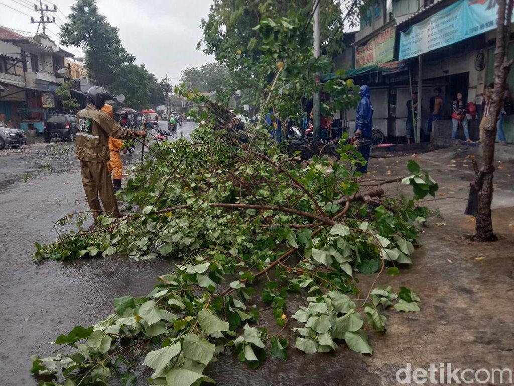 Hujan Deras Disertai Angin, 11 Pohon di Surabaya Bertumbangan