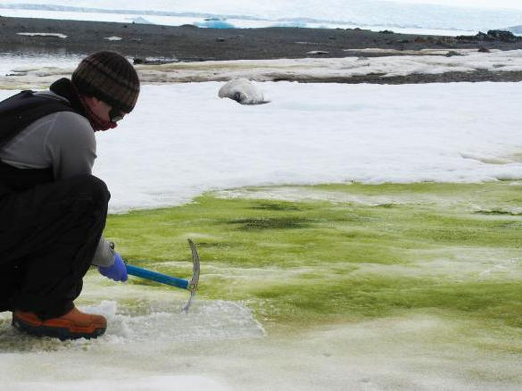 Pemanasan Global Malah Hijaukan Antartika
