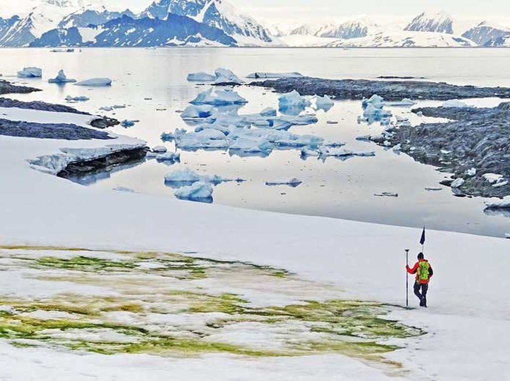 Ajaib, Salju di Antartika Berubah Jadi Hijau