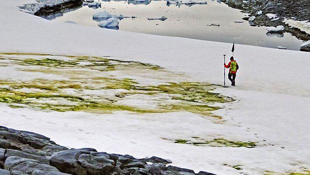 Potret Kutub Selatan yang Punya Salju Hijau