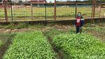 Penampakan Stadion Andi Mattalatta yang Ditanami Sayur