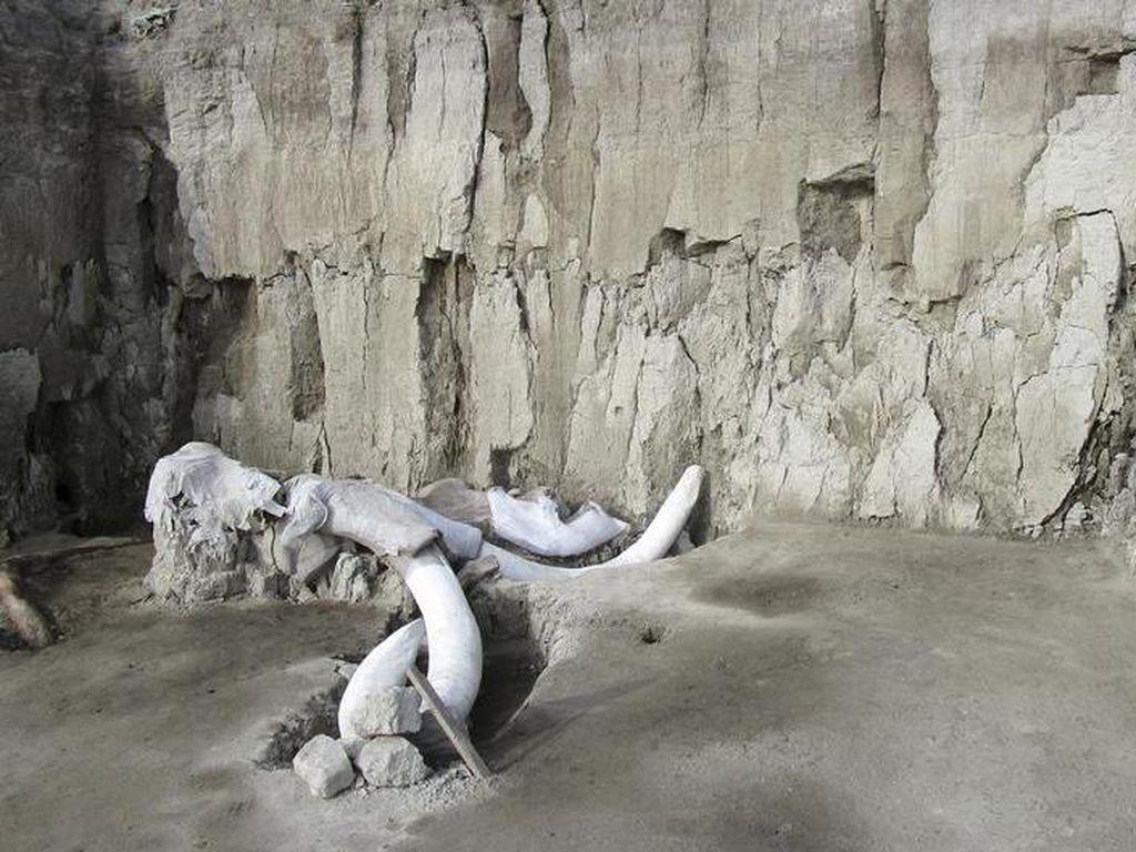 60 Fosil Mamut Raksasa Ditemukan di Lokasi Proyek Bandara Baru Mexico City