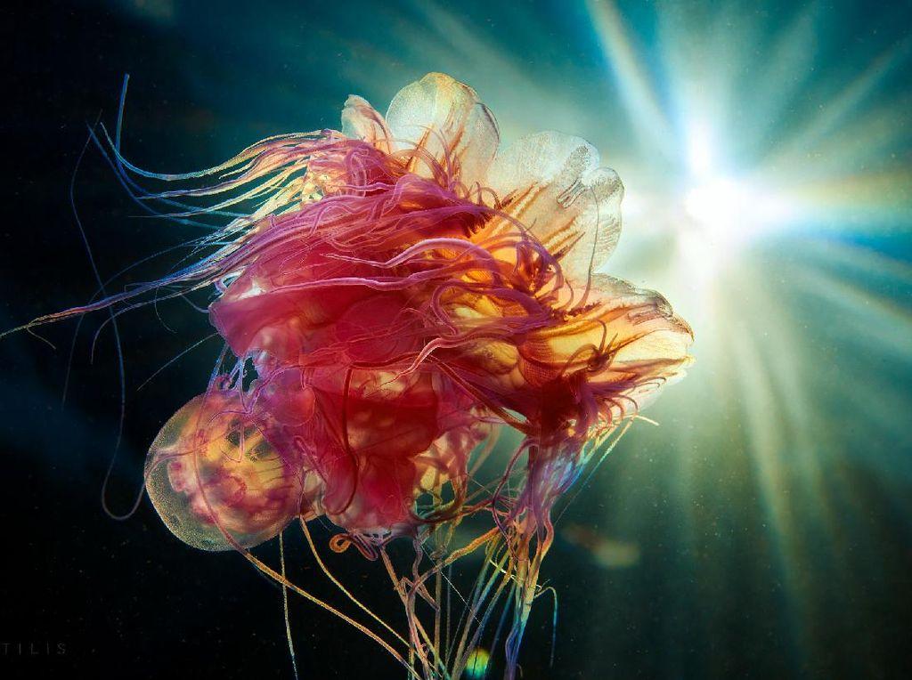 Penampakan Makhluk Bawah Laut yang Bikin Mata Terpana