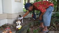Para Relawan di Solo Ini Sisir Kucing Liar yang Terdampak Pandemi