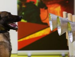 Anjing Bisa Endus Bau Khas Infeksi COVID-19