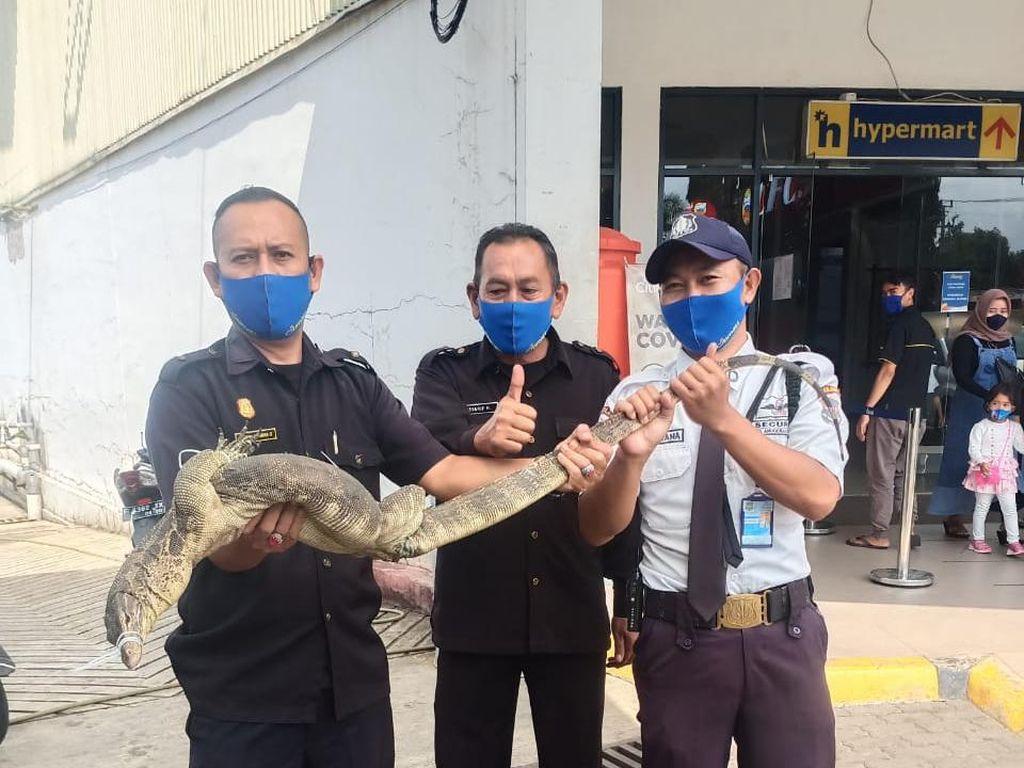 Waduh, Biawak 1,5 Meter Bikin Geger Pengunjung Mal di Cianjur