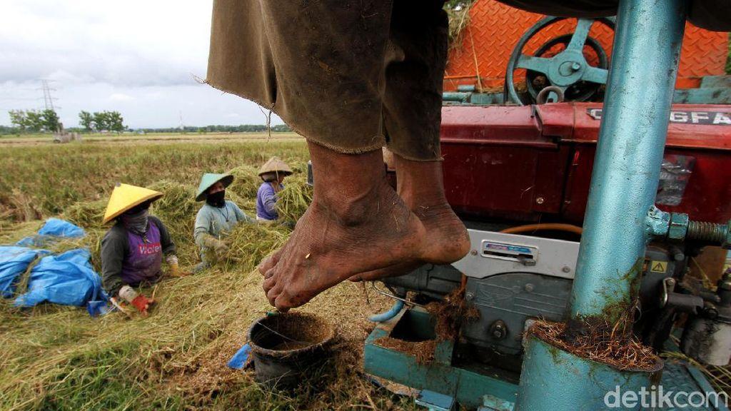 Melihat Aktivitas Buruh Tani Sragen yang Garap Sawah di Sukoharjo