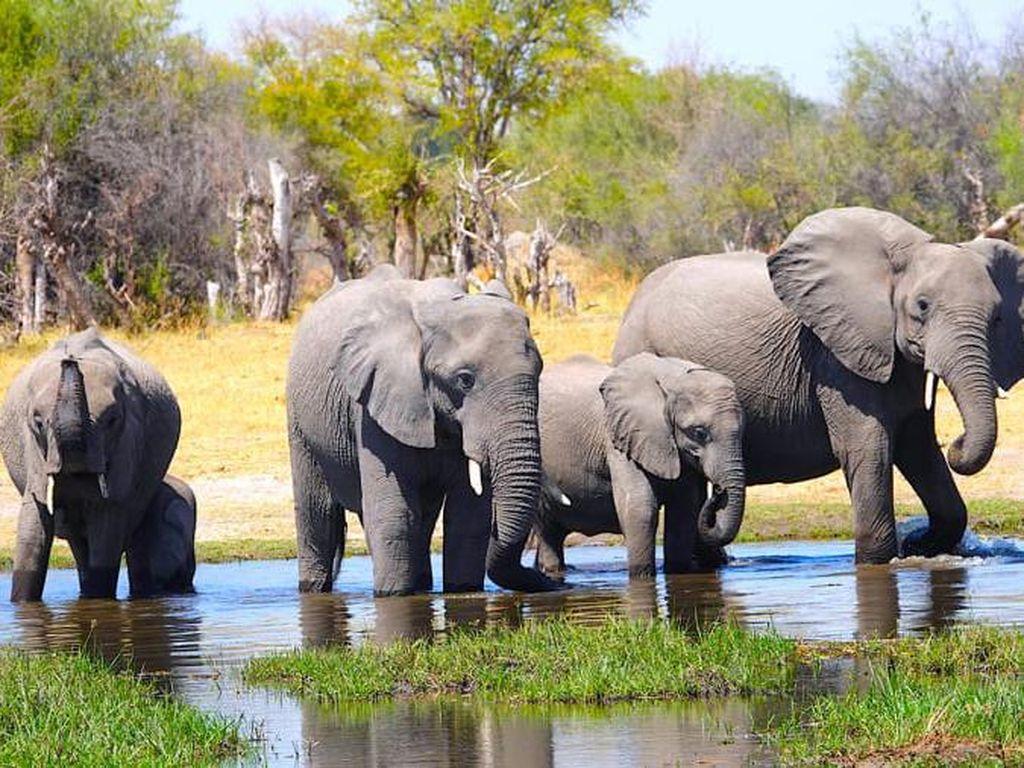 Hari Gajah Internasional, Berikut Negara dengan Daya Tarik Wisata Hewan Itu