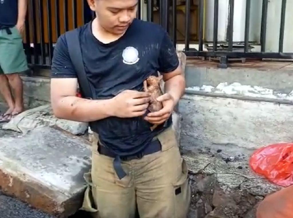 Damkar Jaktim Evakuasi Anak Kucing yang Terjebak di Gorong-gorong