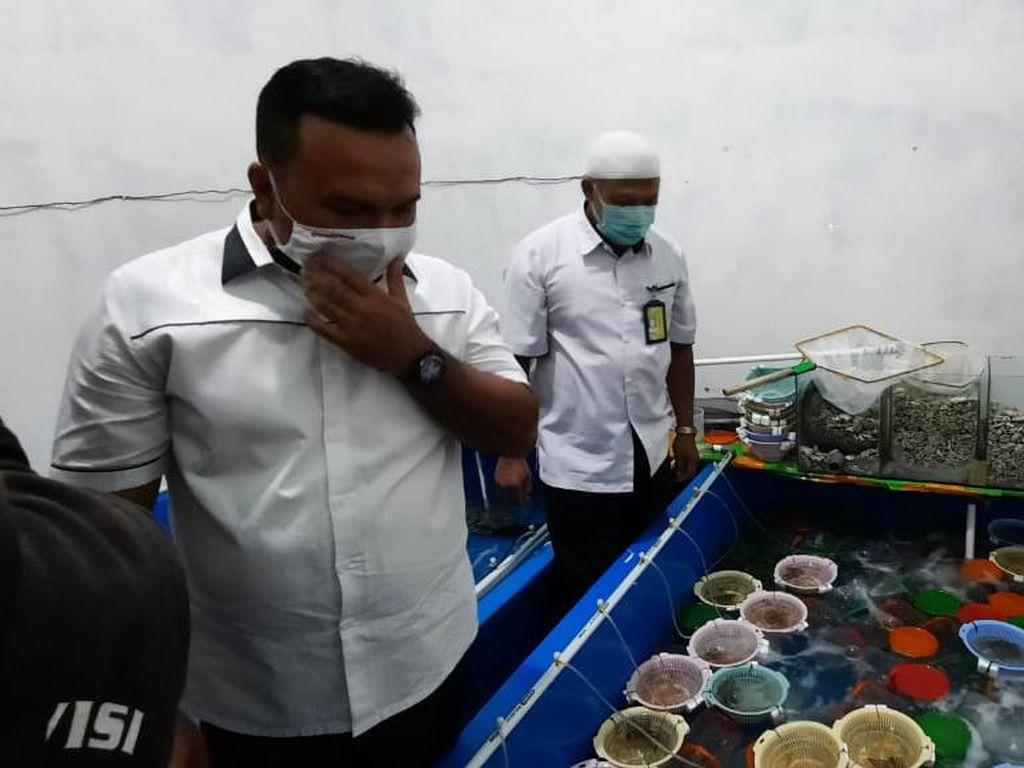 Benih Lobster Rp 6,7 M Hendak Diselundupkan ke Malaysia, 5 Pelaku Dibekuk