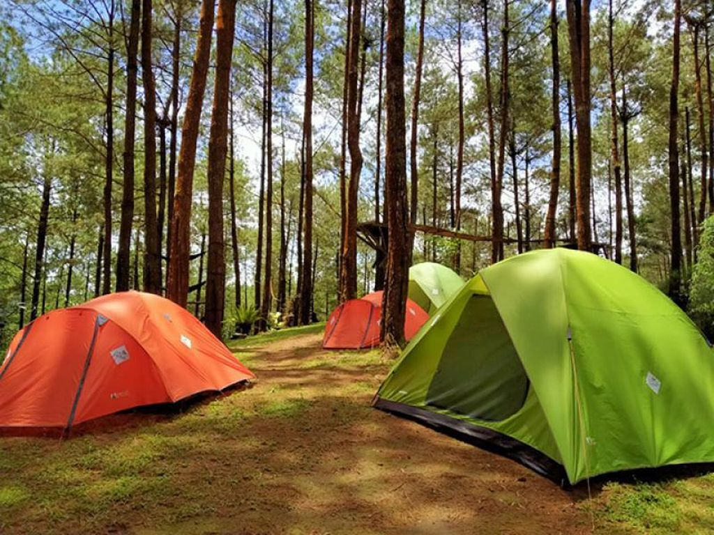 Hutan Pinus Kalilo, Wisata Instagramable di Purworejo