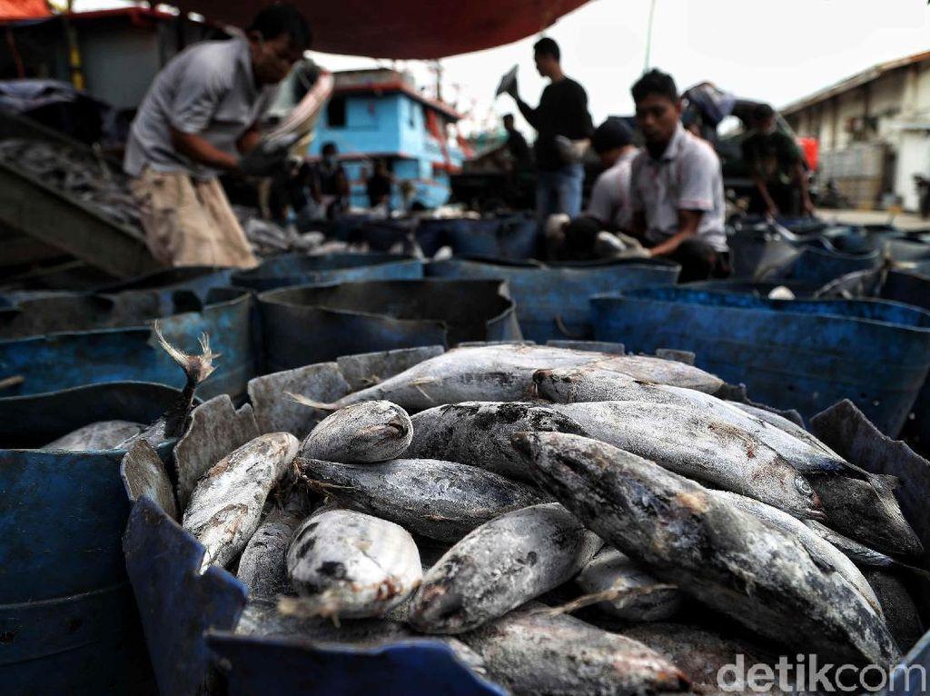 Begini Strategi Pulihkan Bisnis Penangkapan Ikan dari Corona