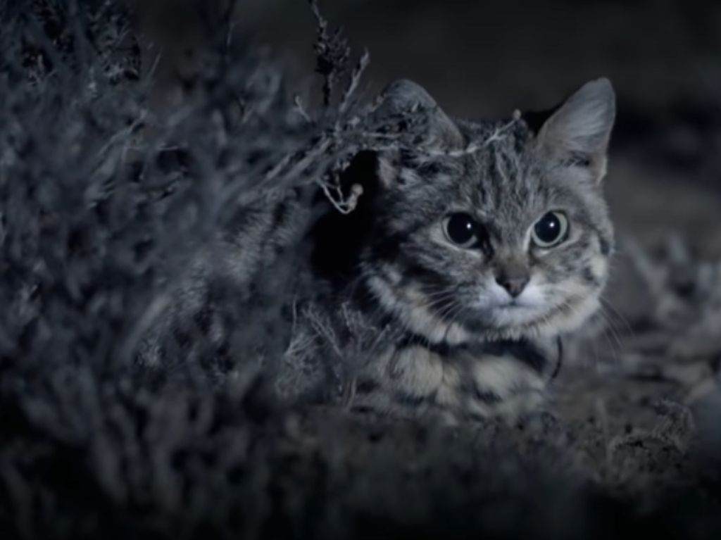 Awas! Kucing Ini Gemesin tapi Mematikan