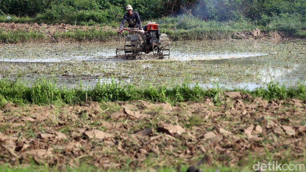 Geliat Petani Cikarang di Tengah Pandemi Corona