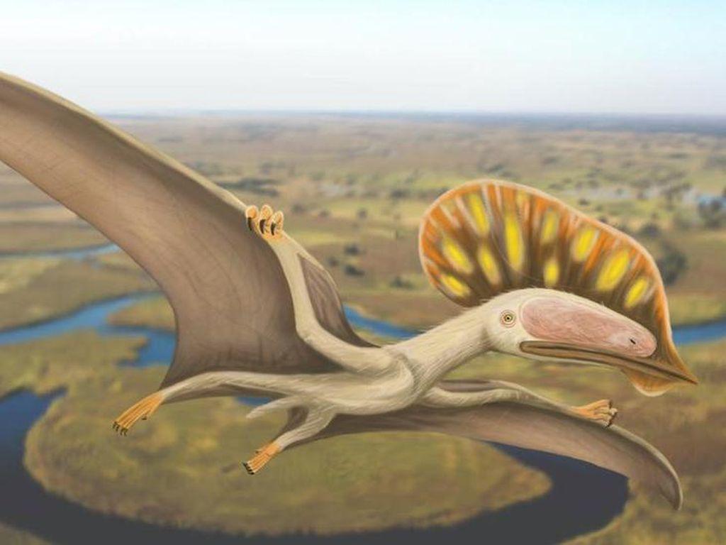 Fosil Reptil Terbang Ditemukan di Inggris, Punya Jambul untuk Daya Tarik Seks