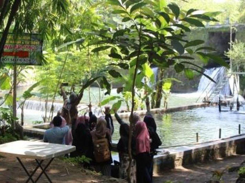 Wisata Asyik ala Pedesaan di Joglo Pari Sewu