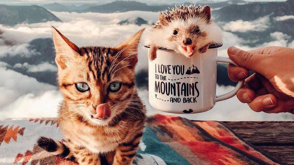 Potret Dua Hewan Menggemaskan yang Hobi Traveling