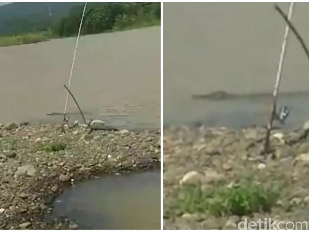 Asyik Mancing di Sungai, Pemancing di Sukabumi Kaget Dihampiri Buaya