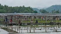 Pemancing Mulai Padati Rawa Jombor Klaten