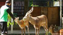 Solo Zoo Bersiap Buka Kembali, FX Rudy Minta Ada Protokol Kesehatan