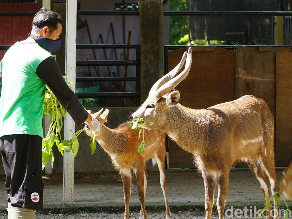 Solo Zoo Segera Dibuka, Ibu Hamil dan Anak-anak Dilarang Berkunjung