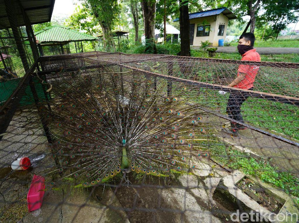 Taman Jurug Solo Matangkan Rencana Sambut New Normal