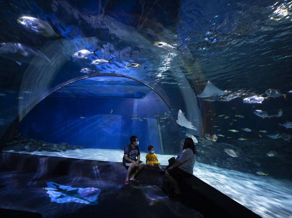 Hadapi New Normal, Bioskop-Akuarium di Thailand Kembali Dibuka