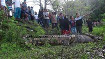 Buaya 4 Meter Ditangkap di Parepare, Kerap Mangsa Ternak-Serang Warga