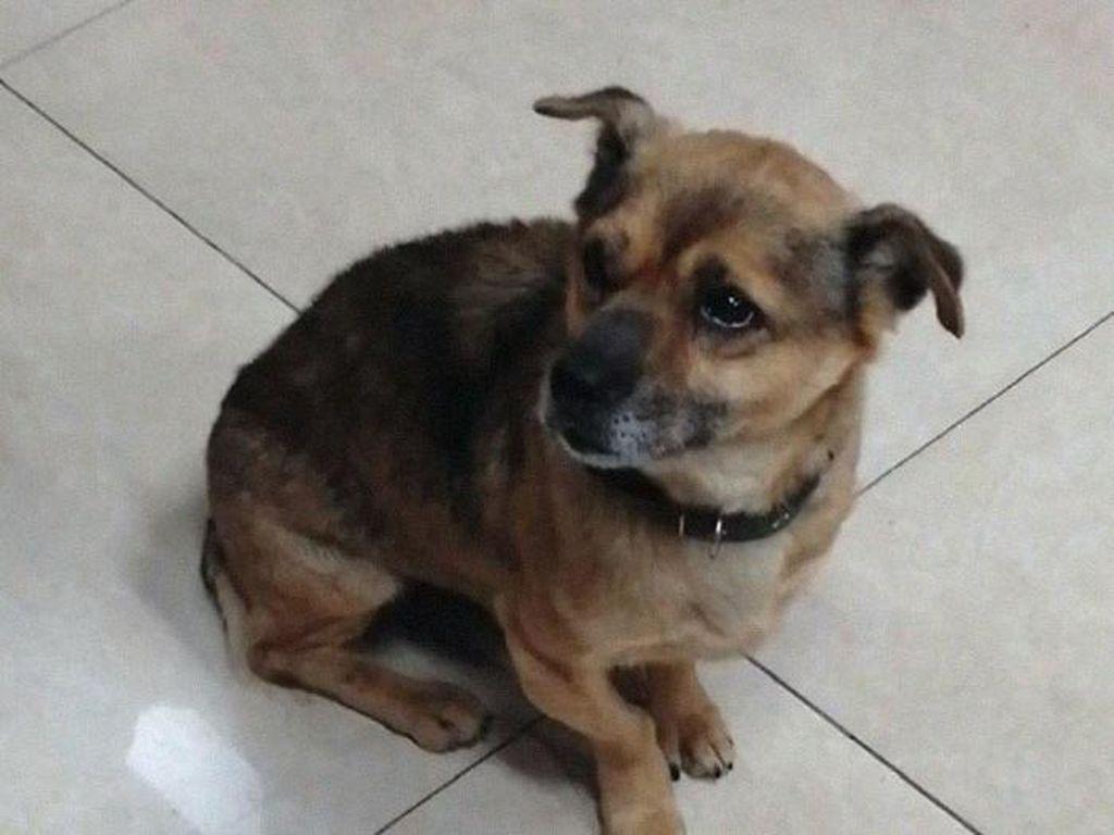 Majikan Wafat Kena Corona, Anjingnya Tak Mau Pulang dari RS