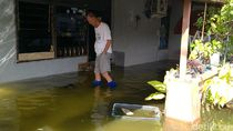 Banjir Rob Genangi Permukiman di Kota Pekalongan Hari Ini