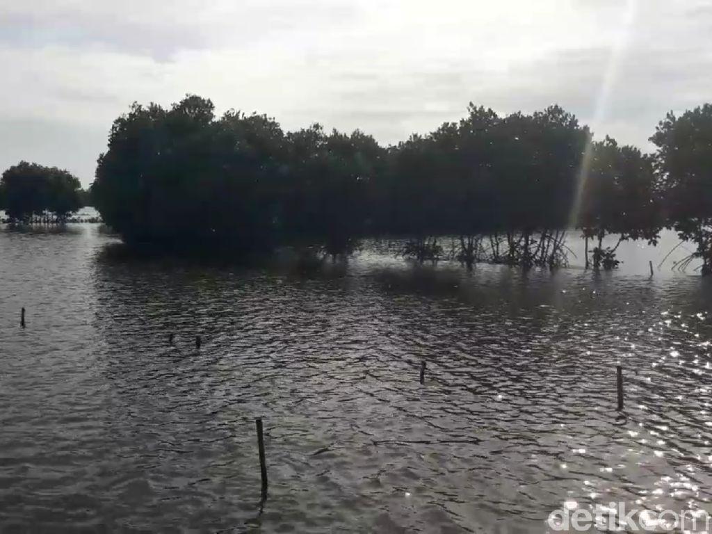 200 Ha Tambak di Pantura Brebes Terendam Banjir Rob