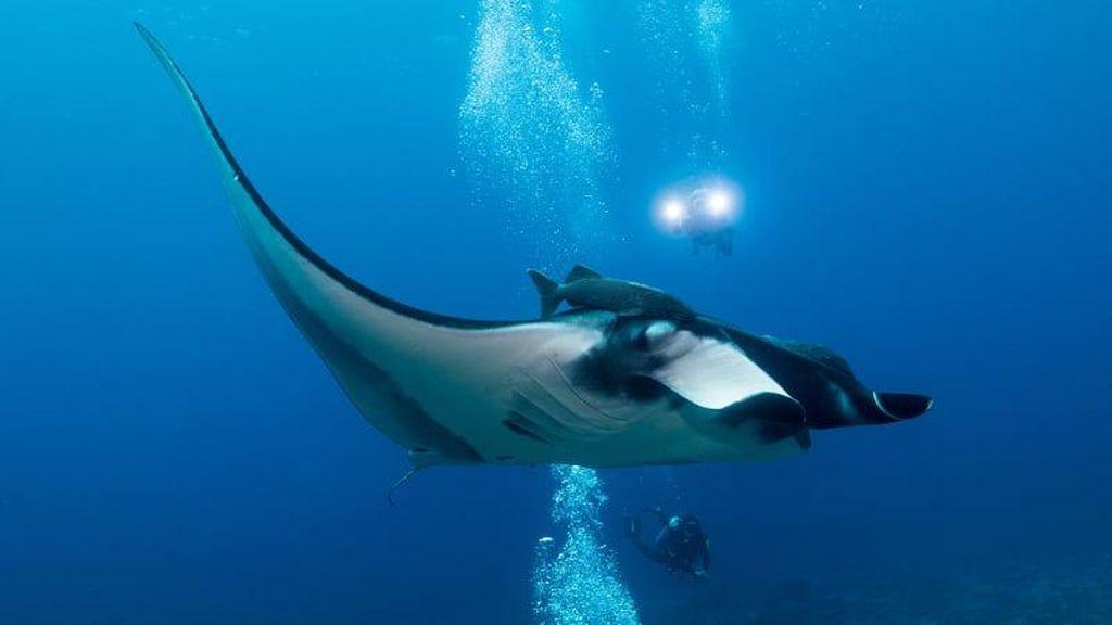 Destinasi Menyelam Terbaik di Dunia (I)
