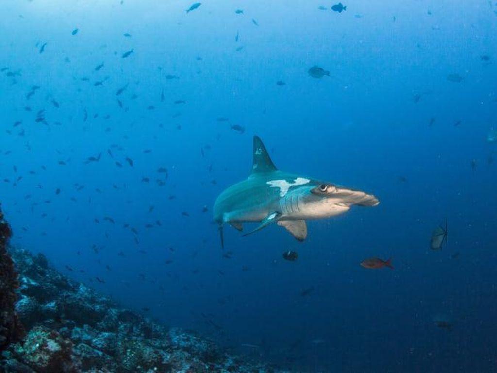 Destinasi Menyelam Terbaik di Dunia (II)