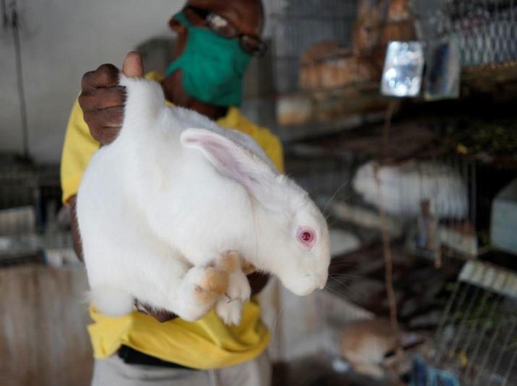 Krisis Ekonomi di Kuba, Kelinci Ditukar Bahan Makanan