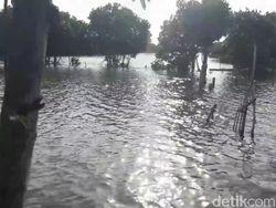 Tambak Udang dan Ikan di Brebes yang Terdampak Banjir Rob Meluas