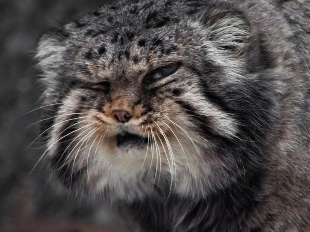 Foto: Kucing Berwajah Nyebelin Sedunia