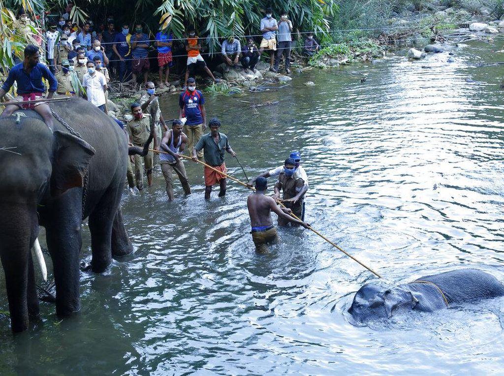 Kasus Gajah Mati dan 10 Fakta Tentang Gajah