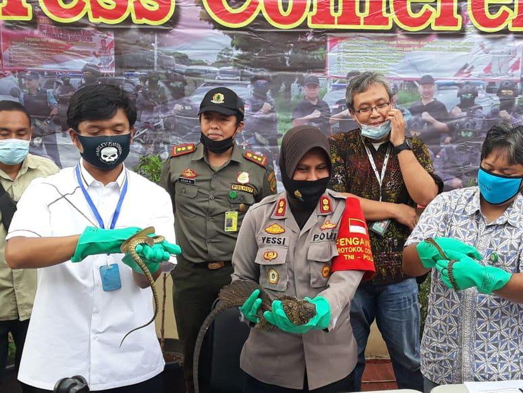 Polres Bandara Soetta Sita 153 Ekor Reptil Selundupan dari Ambon