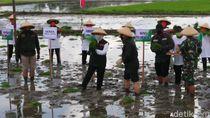 Genjot Stok Pangan Nasional, Jatim Percepat Masa Tanam Padi