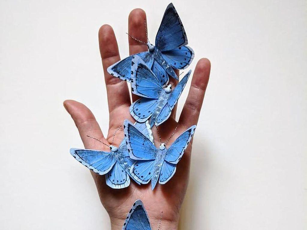 Saya Mau Beli Kupu-kupu yang Diawetkan, Apakah Tidak Melanggar Hukum?