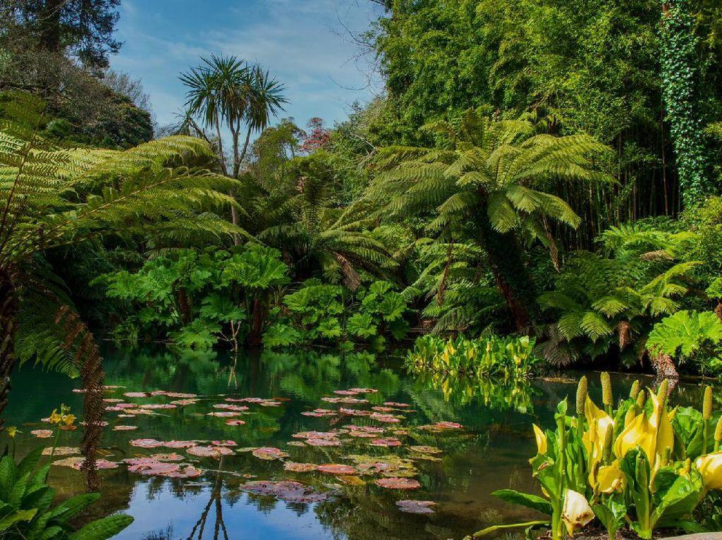 Kebun Raya Populer di Inggris Buka Lagi