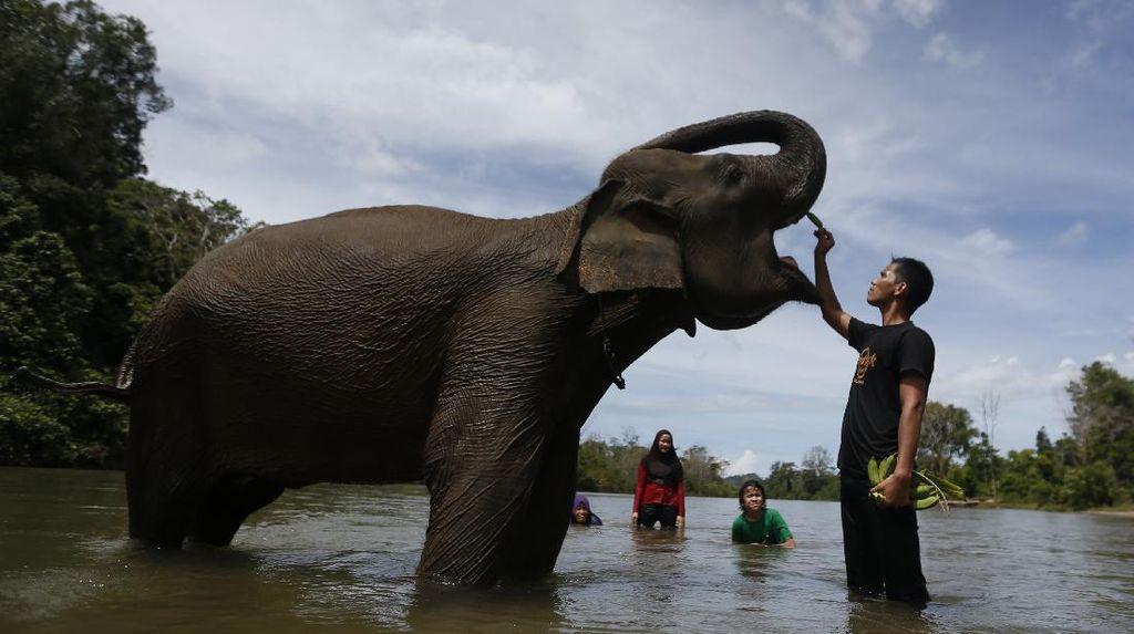 Wisata Konservasi di Aceh Dibuka Lagi Saat New Normal