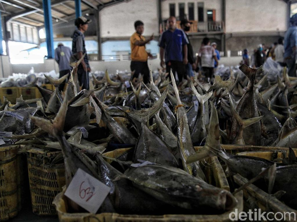 Tempat Pelelangan Ikan Muara Angke Kembali Bergeliat