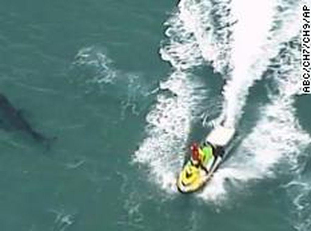 Peselancar Australia Tewas Digigit Hiu Sepanjang Hampir 3 Meter