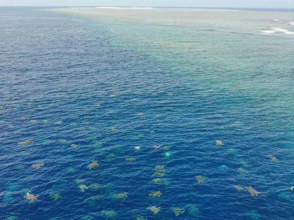 Momen Spektakuler Great Barrier Reef Jadi Sarang Ribuan Penyu